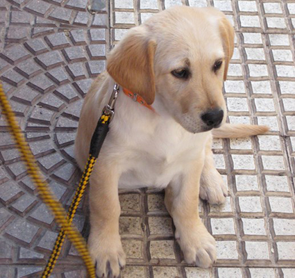 ¿ Tu primer perro o cachorro ?