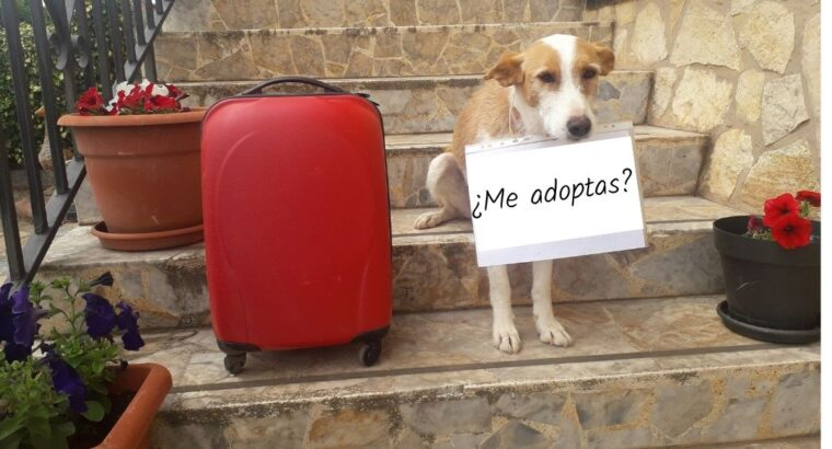 Integración de perros adoptados